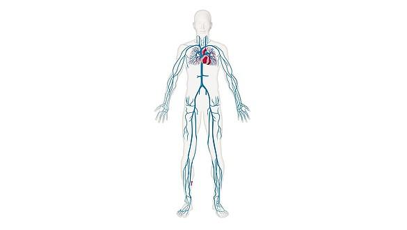 Diagnose und Therapie - Diagnose und Therapie