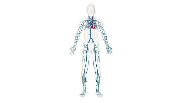 Diagnose & therapie - Diagnose & therapie