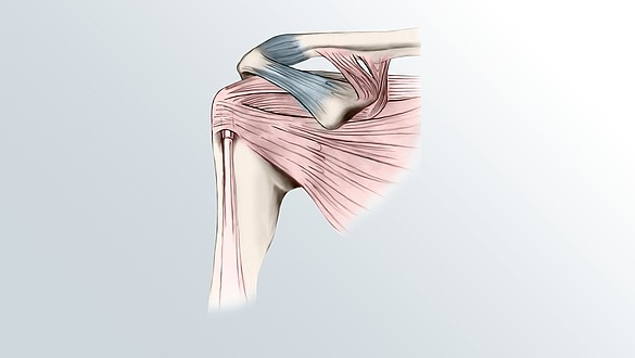 shoulder joint anatomy -